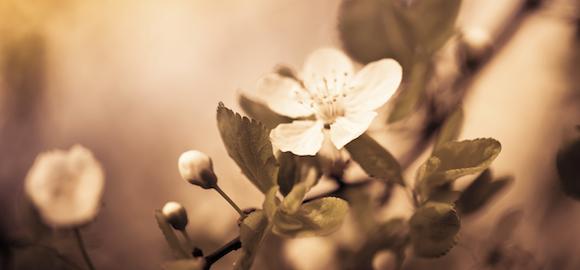 Ménage du printemps… N'oubliez pas votre Foie!