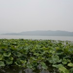 Petite pause bien méritée à deux pas de l'hôpital de Hangzhou. Une oasis en plein coeur de la ville!